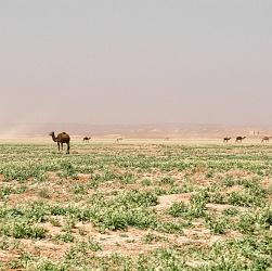 Desert - Morocco