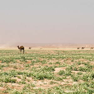 2013_morocco_mirage