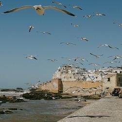 Sense of Place - Morocco