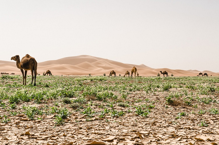 morocco, mirage